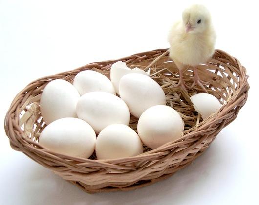 你不全知道的鸡蛋存放小窍门 - zn99.ok - blog-zn