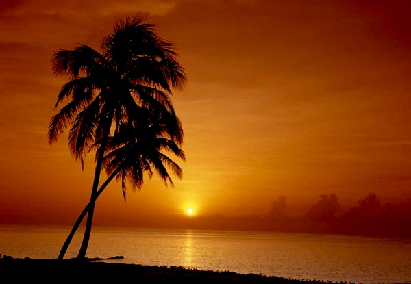 palm_tree_sunset