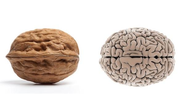 walnut and brain