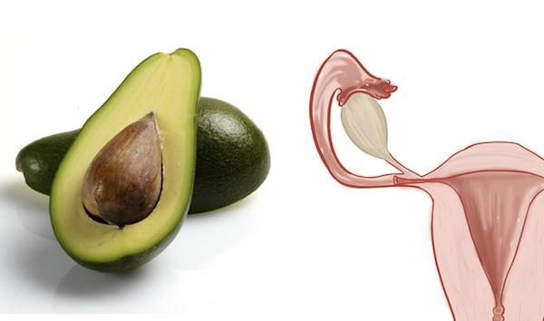 avocado and uterus