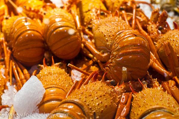 Lobsters_Sydney-Fish-Market