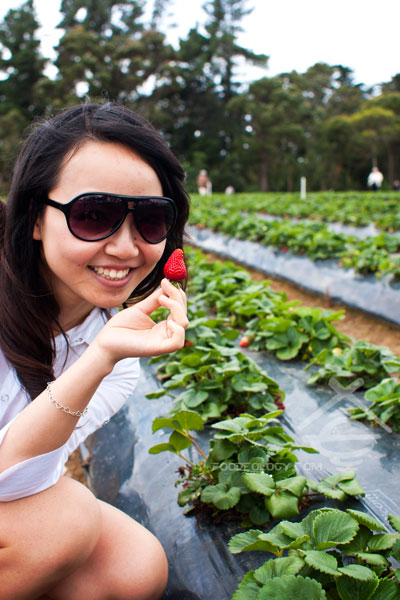 Sunny-Ridge-Strawberry-Farm_Melbourne