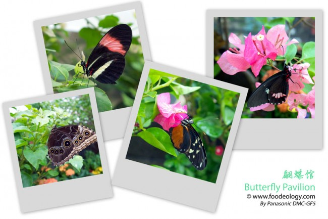 Butterfly-Pavilion-Macau-MGM_Collage