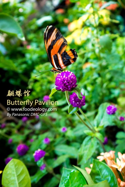 Butterfly-Pavilion-Macau-MGM_Single