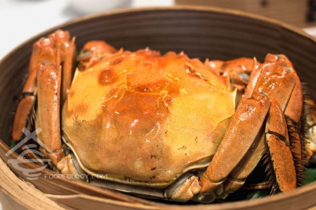 Hairy-Crab-right_Putien