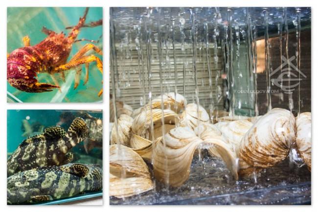 Majestic-Bay-Seafood