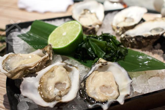 Oysters_Addition-Aquatic-Development